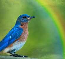 Somewhere over the rainbow, bluebirds fly . . . by Bonnie T.  Barry