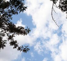 Clouds enclosed by Trees by loriwellsphoto
