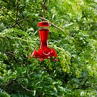 Red Bird Feeder by Joy  Rector
