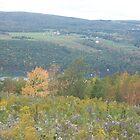 Changing Seasons Fall Bare Hill, Canandaigua, NY by Glasseye74