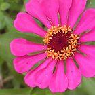 Flower Vibrant Pink by Glasseye74