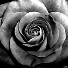 Anniversary Remnant - Black & White by Deb  Badt-Covell