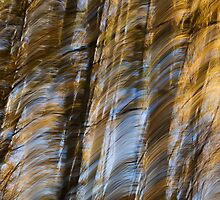 Fall Tree Motion Study 2 by rjcolby