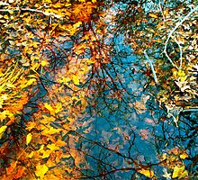 Puddle Autumn by Dr. Charles Taylor