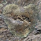 I Heart Lichen by ToddDuvall