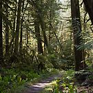 Rainforest Path by ToddDuvall