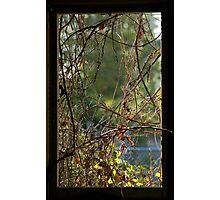 Nature's Curtains Photographic Print