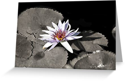 Water Lily ~ I Stand Here Alone and Yet Strong by Carla Jensen