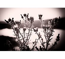 Thistle_Loch Sport Photographic Print