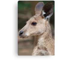 Skippy - The Original Canvas Print