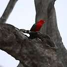 Parrot King by John Brumfield