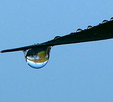 Refracting Dew Drop by swaby