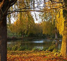 Autumn Colours by Bel Menpes