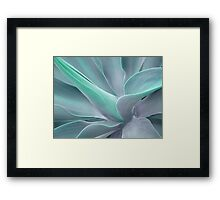 Soft Tint Agave Attenuata Framed Print