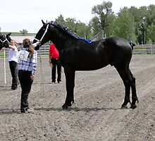 Magnificent Percheron by Al Bourassa