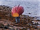 Down to the Sea by Carol Bleasdale