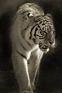 TIGER II by Debbie Ashe
