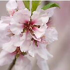 Romantic Pink Almond Blossom by Buttershug2