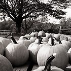 Pumpkin Patch by O. Joy