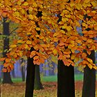 6625 ♥ ♥ ♥ ♥ series . Forever Autumn   . Eye-catcher - For Sure ! Fav: 76 Views:  6625 . Thx friends ! muchas gracias !!! This image Has Been S O L D . Buy what you like!  by AndGoszcz