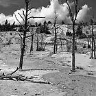 After the Fire by Nigel Fletcher-Jones