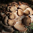 Mushrooms by DebbieCHayes