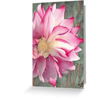 Point Defiance Garden Flower Greeting Card