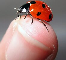 Ladybird on my finger by Luci Mahon