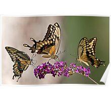 Swallowtail Symphony Poster