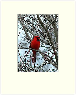Cardinal in Winter by Gayle Dolinger