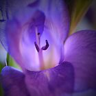Purple Gladiola by walstraasart