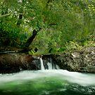 Wallaby Creek, Little falls, Home rule, FNQ by Susan Kelly