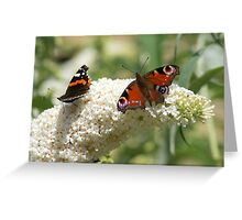 Butterfly Dancers ~ On White Buddliah ~ Greeting Card