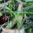 Lady Bug 2 by Cassie Jahn