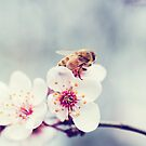 Bee on Plum Blossom by JRoseStudio
