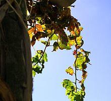 Grape Vine for Fall by Renee D. Miranda
