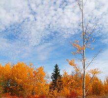 Autumn sky by zumi