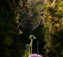 The Spider and the Dahlia by Aimee Stewart