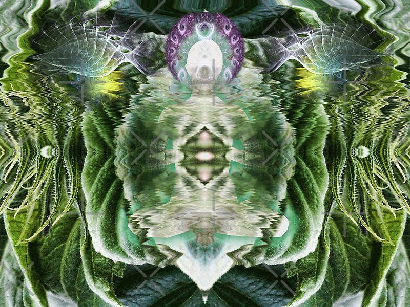 Helianthus by webgrrl