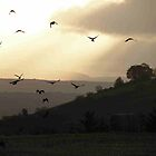 Evening Flight - Derry Ireland  by mikequigley