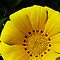 """Gorgeous Flower Cards Challenge - """"Yellow closeup"""""""