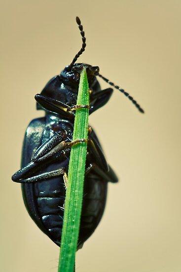 Hidden Beetle by SD Smart