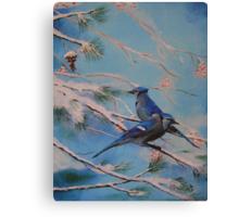 Winter Bluejays Canvas Print