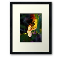 Colours on Kermit Framed Print