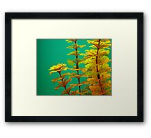 The World Is A Colorful Wonder ~ Part Five Framed Print
