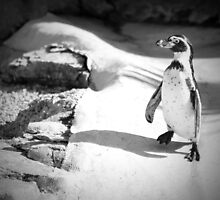 Lonely Penguin by Sandra Farrow