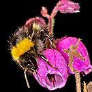 Bee 2 by Gareth Jones