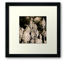 back lit Framed Print