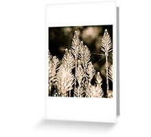 back lit Greeting Card