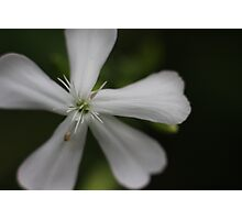 White Flower Macro Photographic Print